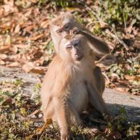 Características de los monos