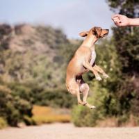 Como demostrarle a tu perro que lo amas