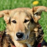 Alergias provocadas en los perros por alimentos